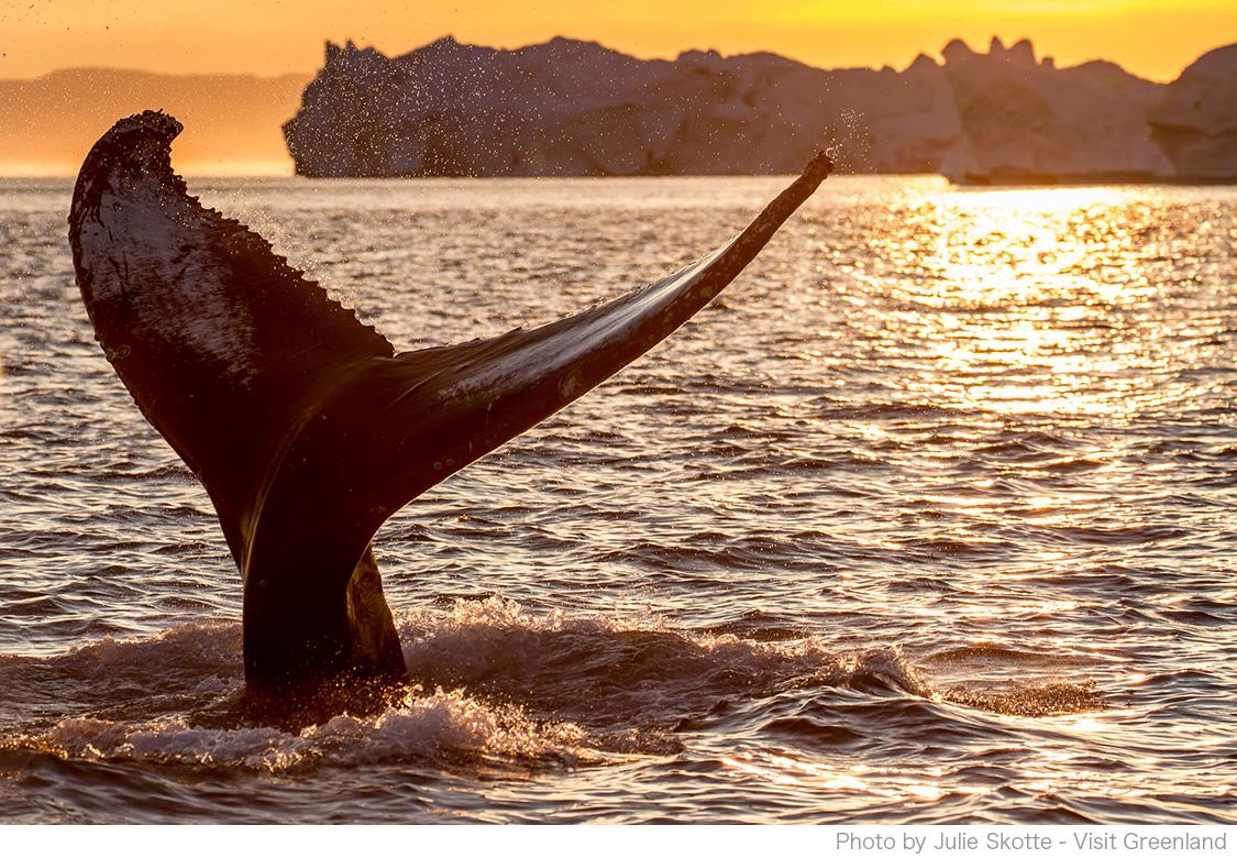 セーリングツアーでクジラに出会える!?