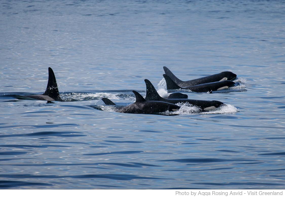 クジラやアザラシなどの海洋動物