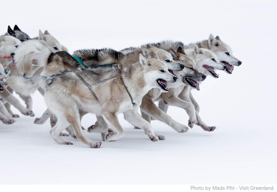 グリーンランドではペットもユニーク!